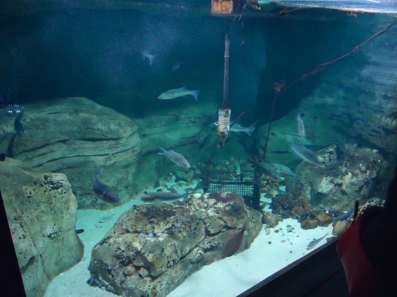 Aquarium du Trocadero à Paris Dsc08520