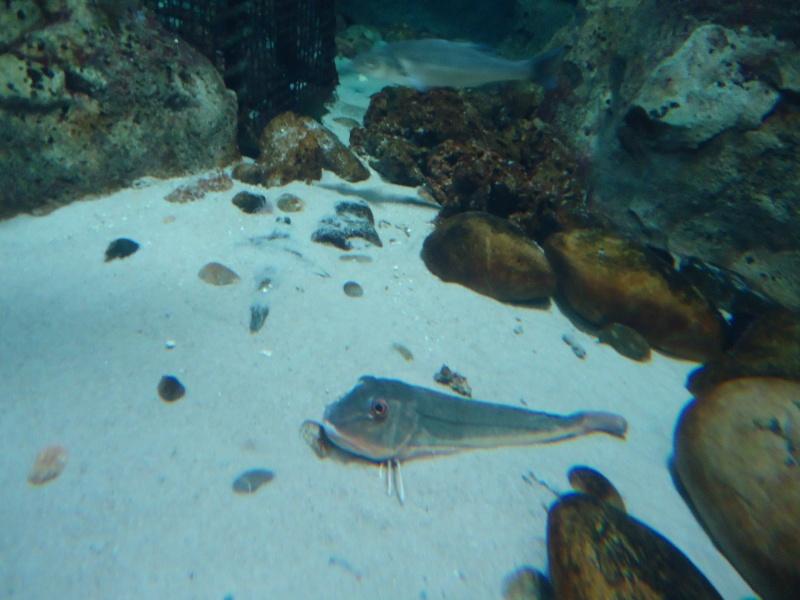 Aquarium du Trocadero à Paris Dsc08521