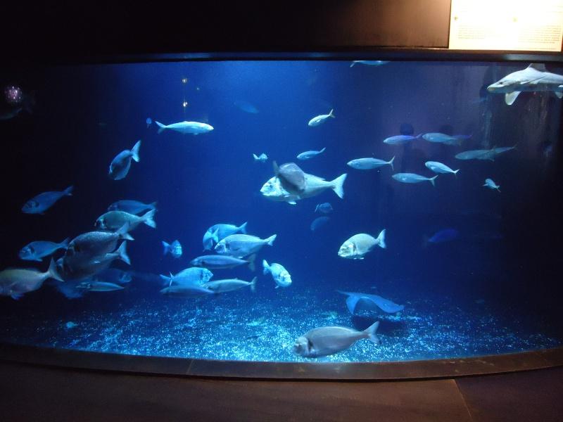 Aquarium du Trocadero à Paris Dsc08523