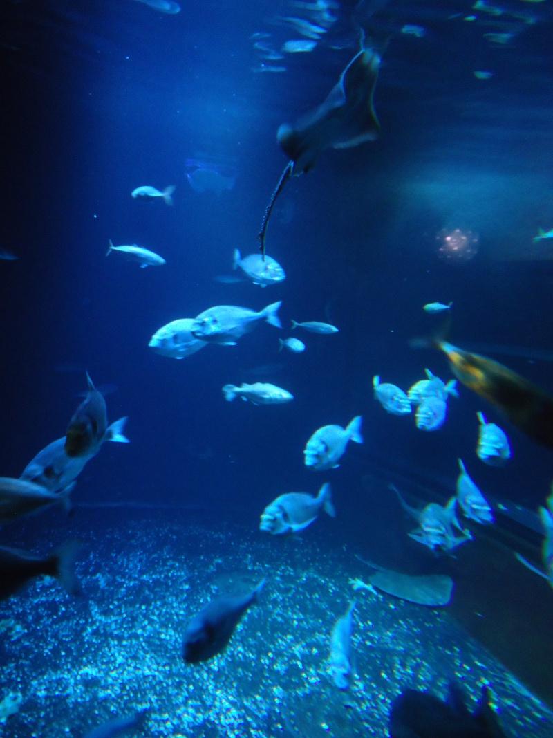 Aquarium du Trocadero à Paris Dsc08524