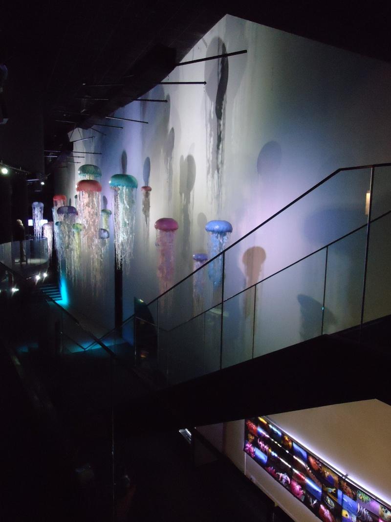Aquarium du Trocadero à Paris Dsc08525