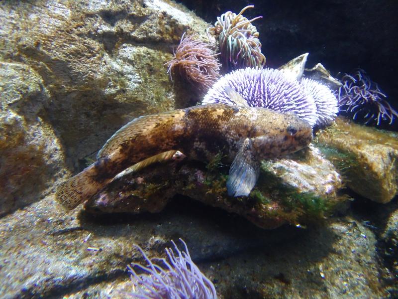 Aquarium du Trocadero à Paris Dsc08528