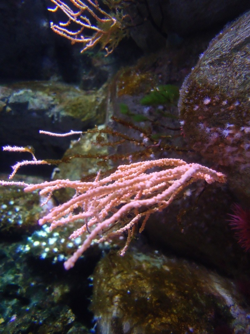 Aquarium du Trocadero à Paris Dsc08529