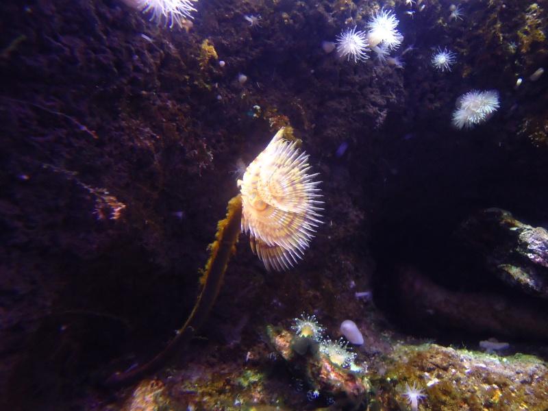 Aquarium du Trocadero à Paris Dsc08532
