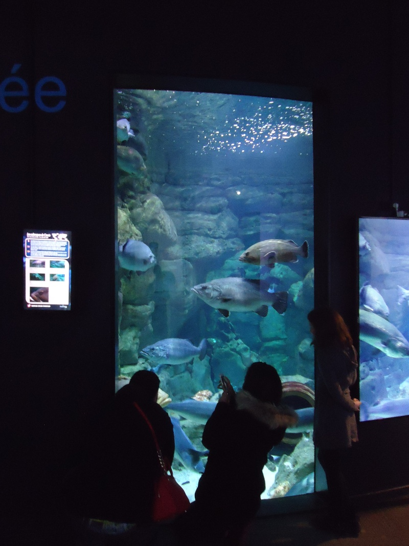 Aquarium du Trocadero à Paris Dsc08537