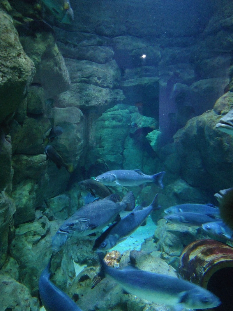 Aquarium du Trocadero à Paris Dsc08538