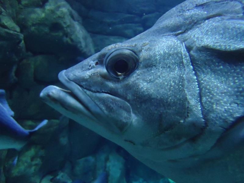 Aquarium du Trocadero à Paris Dsc08539