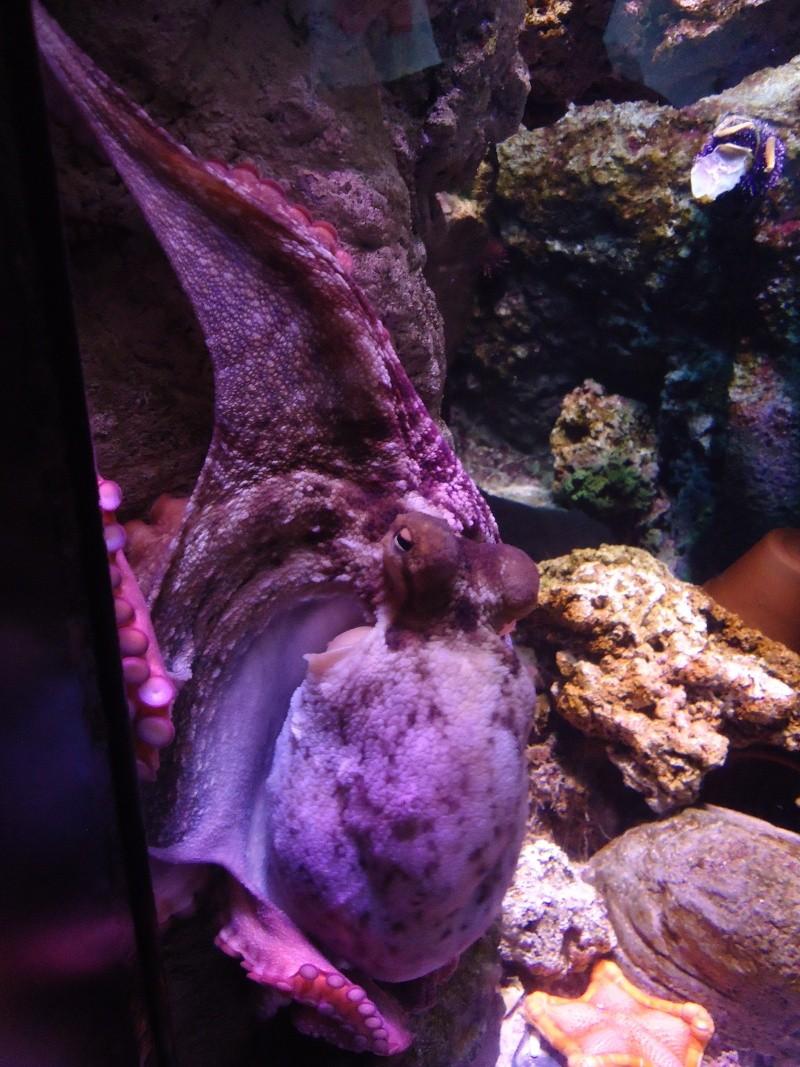 Aquarium du Trocadero à Paris Dsc08553