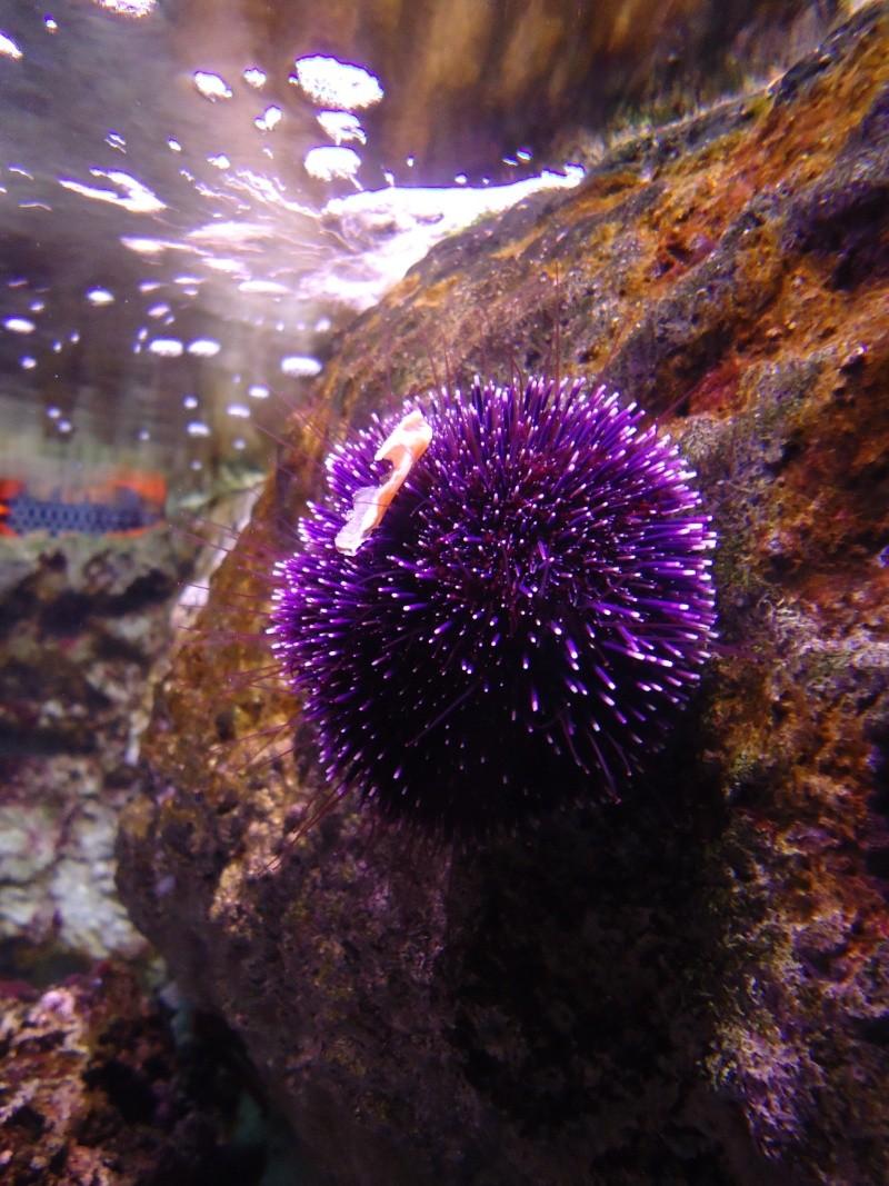Aquarium du Trocadero à Paris Dsc08554