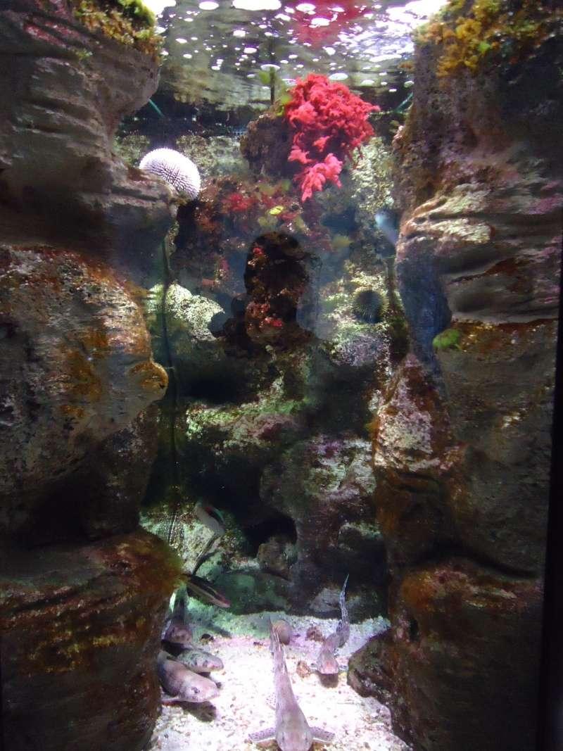 Aquarium du Trocadero à Paris Dsc08555