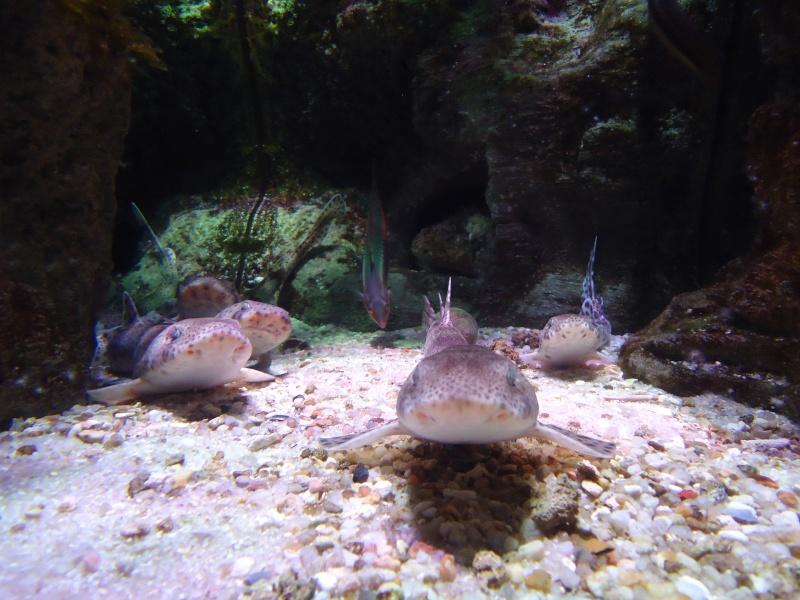 Aquarium du Trocadero à Paris Dsc08556