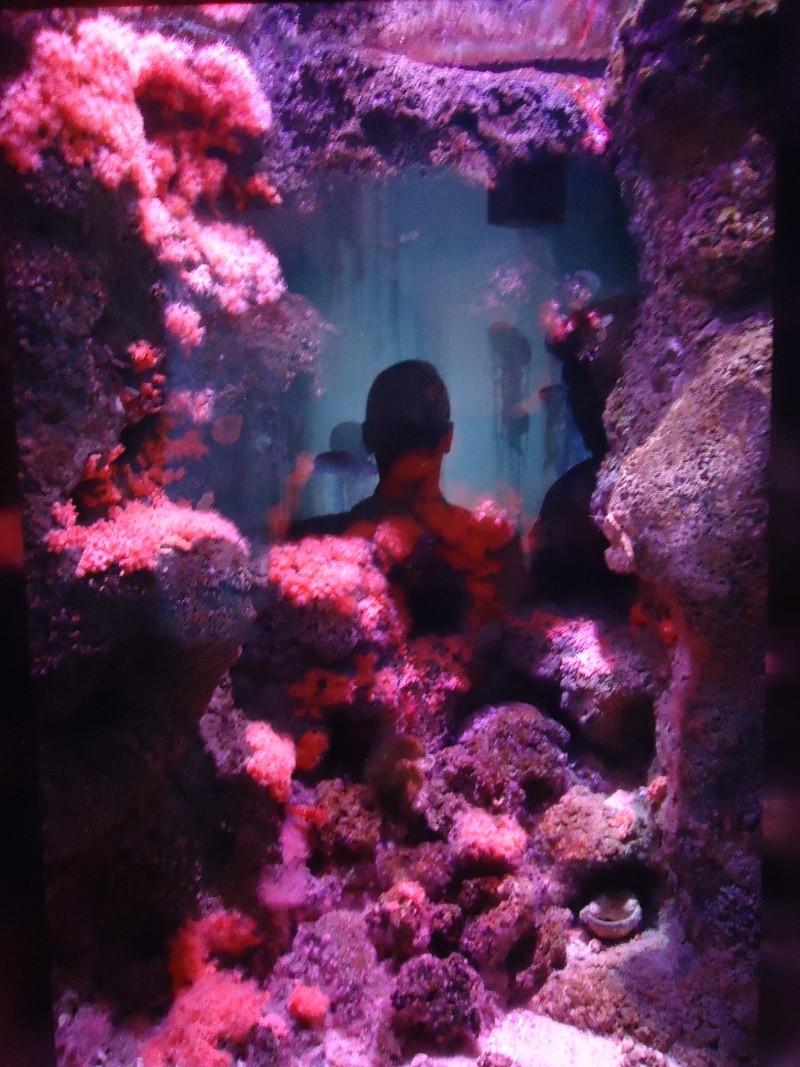Aquarium du Trocadero à Paris Dsc08557