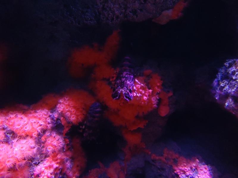 Aquarium du Trocadero à Paris Dsc08559