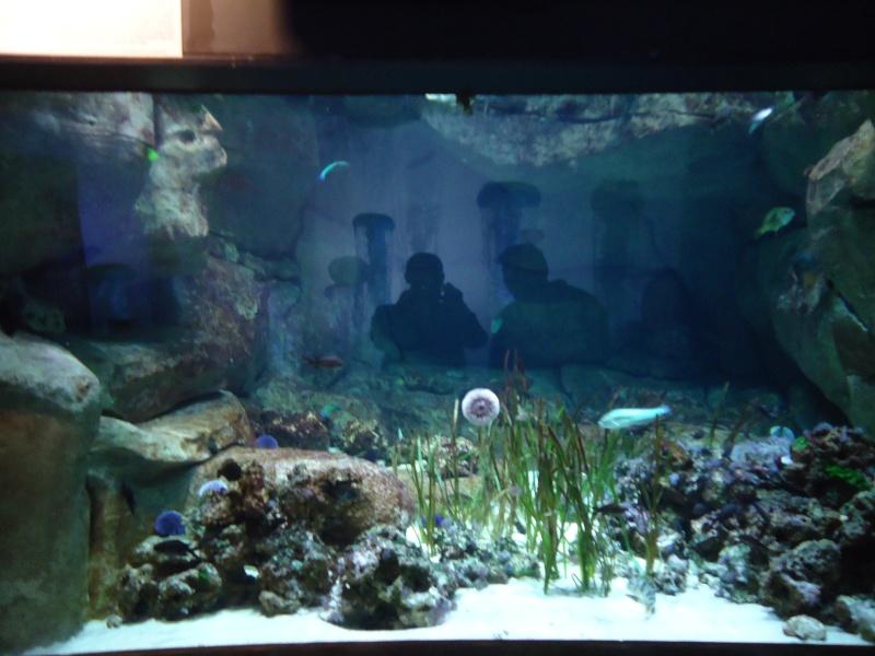 Aquarium du Trocadero à Paris Dsc08560