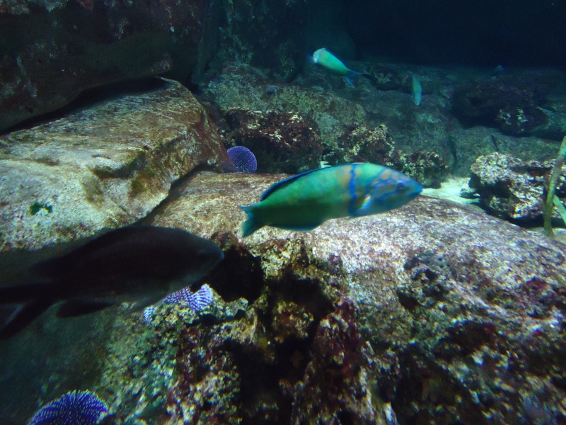 Aquarium du Trocadero à Paris Dsc08561