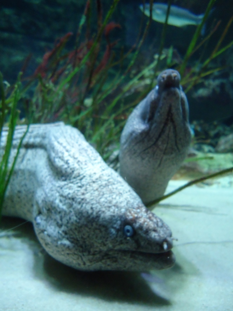 Aquarium du Trocadero à Paris Dsc08563