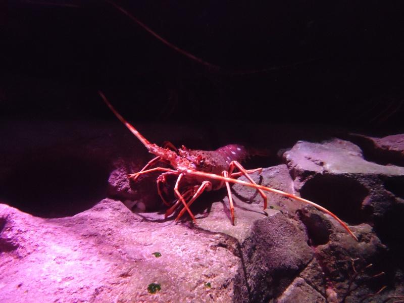 Aquarium du Trocadero à Paris Dsc08566