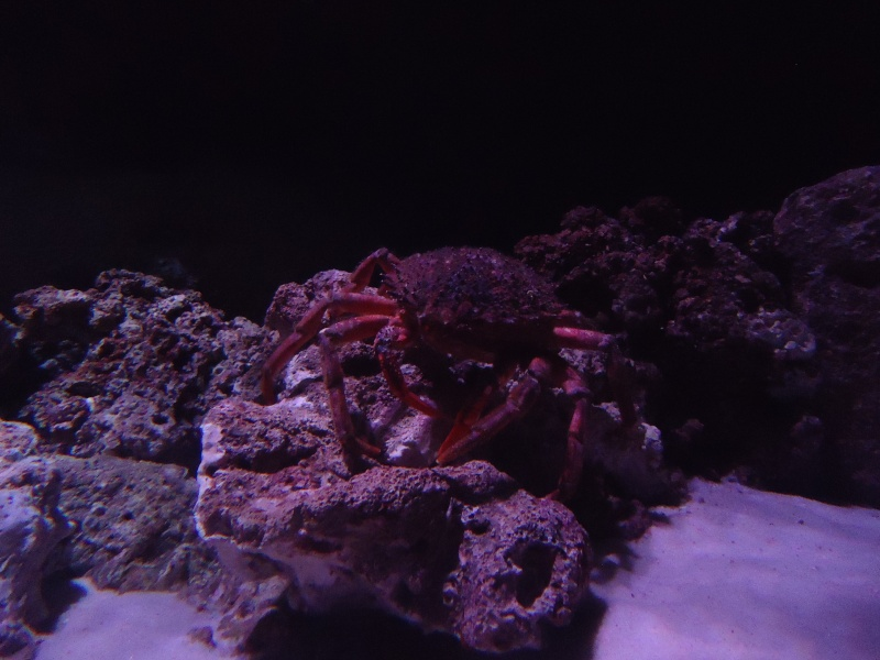 Aquarium du Trocadero à Paris Dsc08567