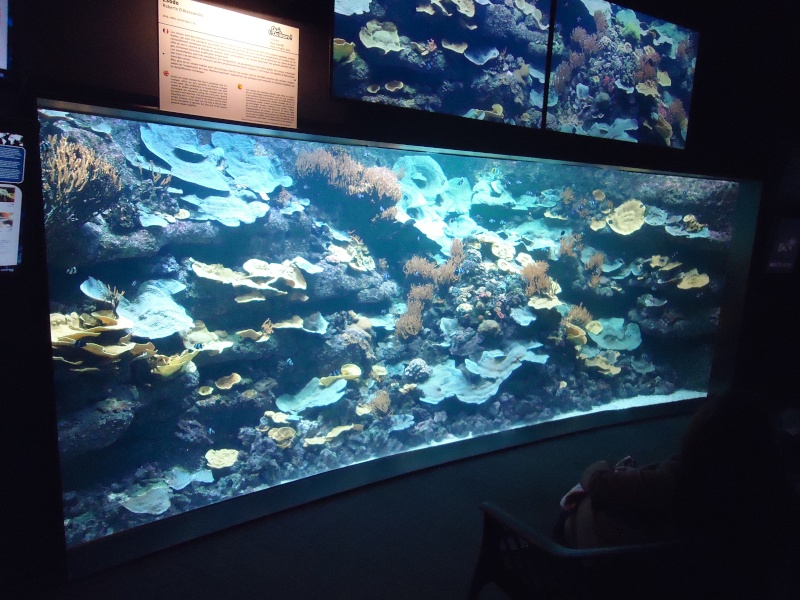 Aquarium du Trocadero à Paris Dsc08569