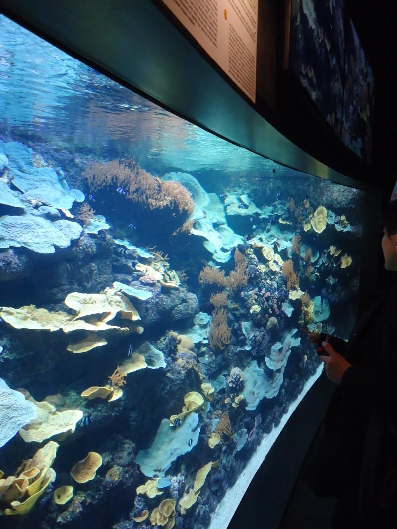 Aquarium du Trocadero à Paris Dsc08570