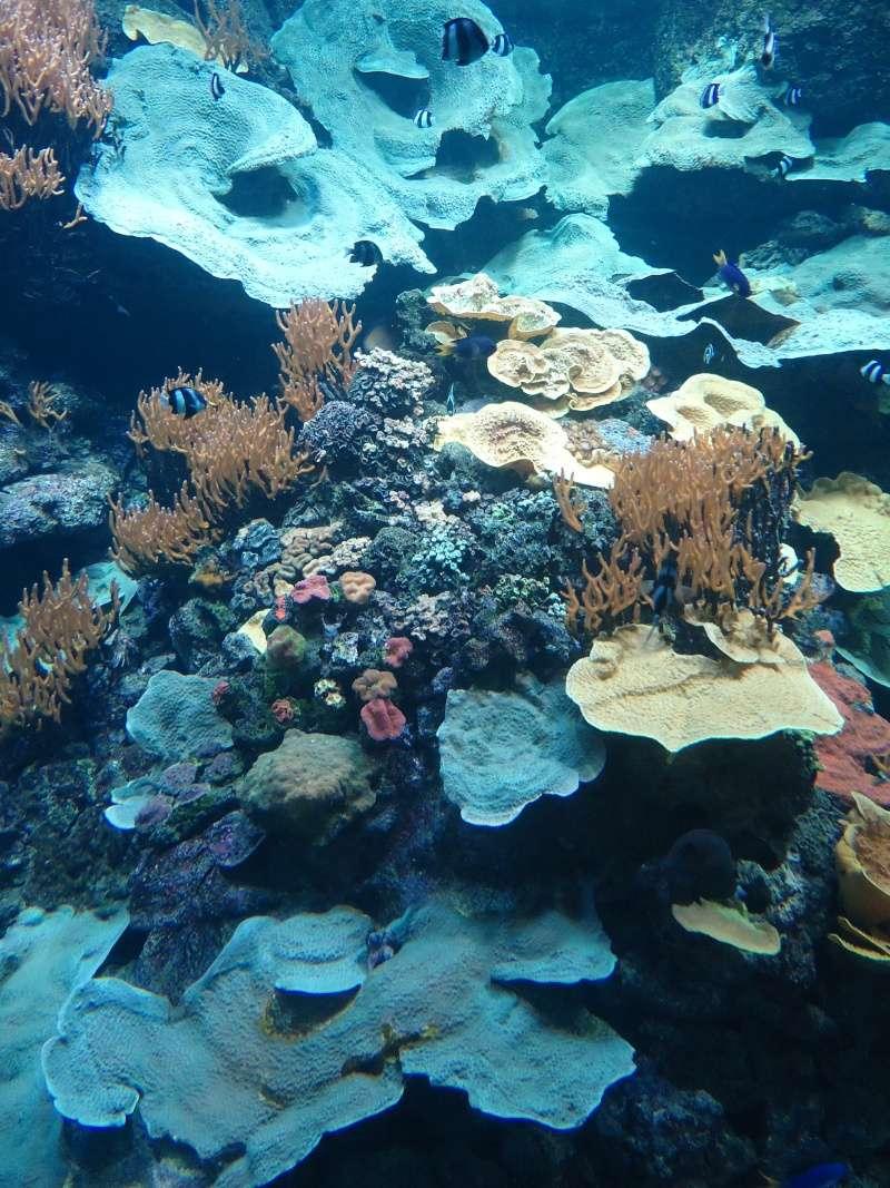 Aquarium du Trocadero à Paris Dsc08572