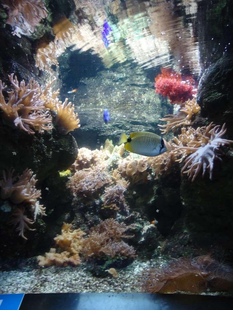 Aquarium du Trocadero à Paris Dsc08574