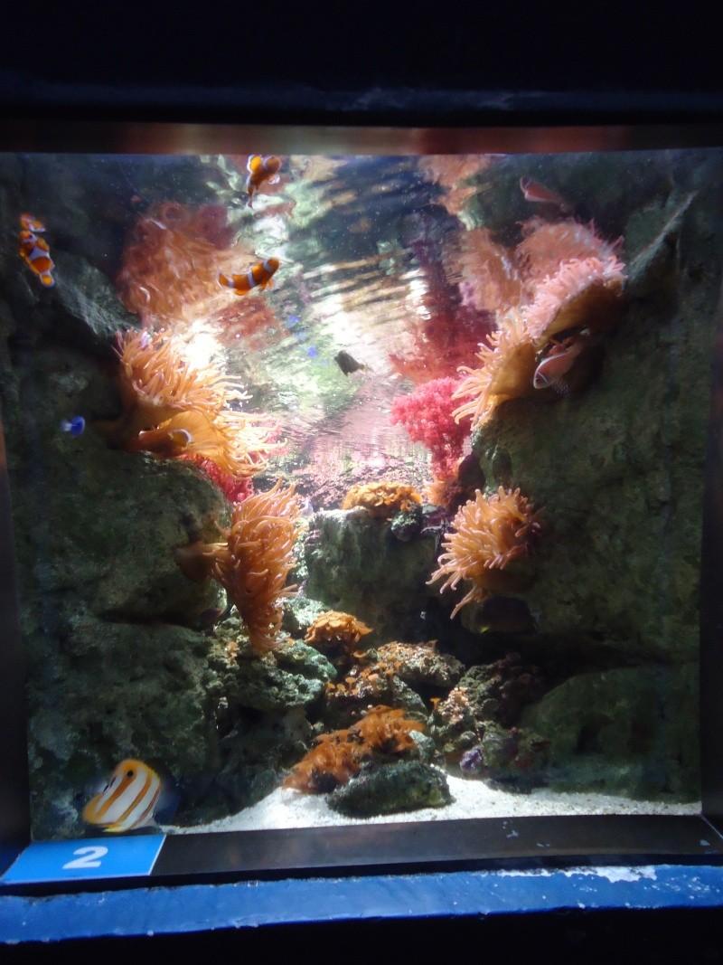 Aquarium du Trocadero à Paris Dsc08575
