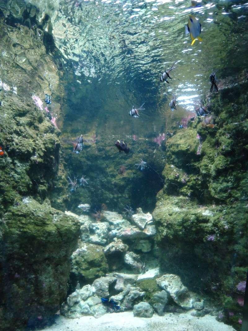 Aquarium du Trocadero à Paris Dsc08576