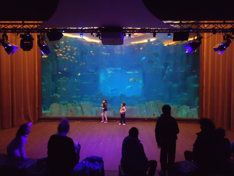 Aquarium du Trocadero à Paris Dsc08610