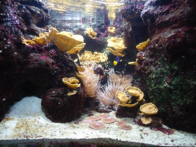Aquarium du Trocadero à Paris Dsc08618