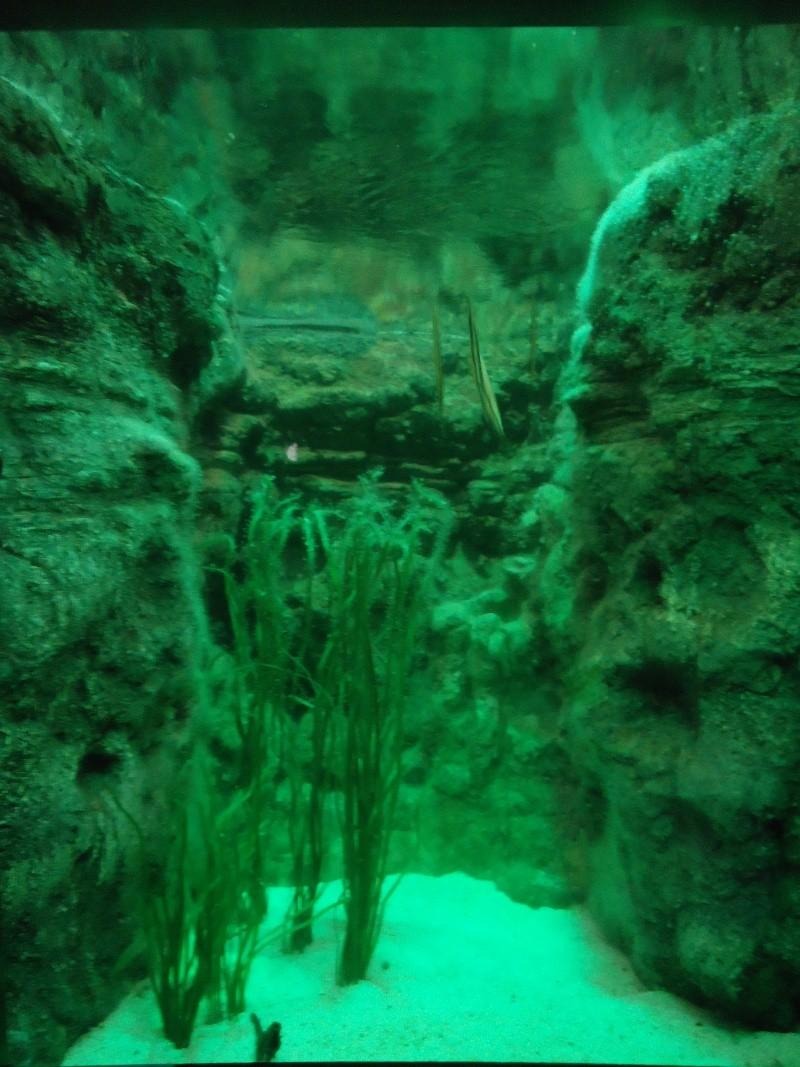 Aquarium du Trocadero à Paris Dsc08619