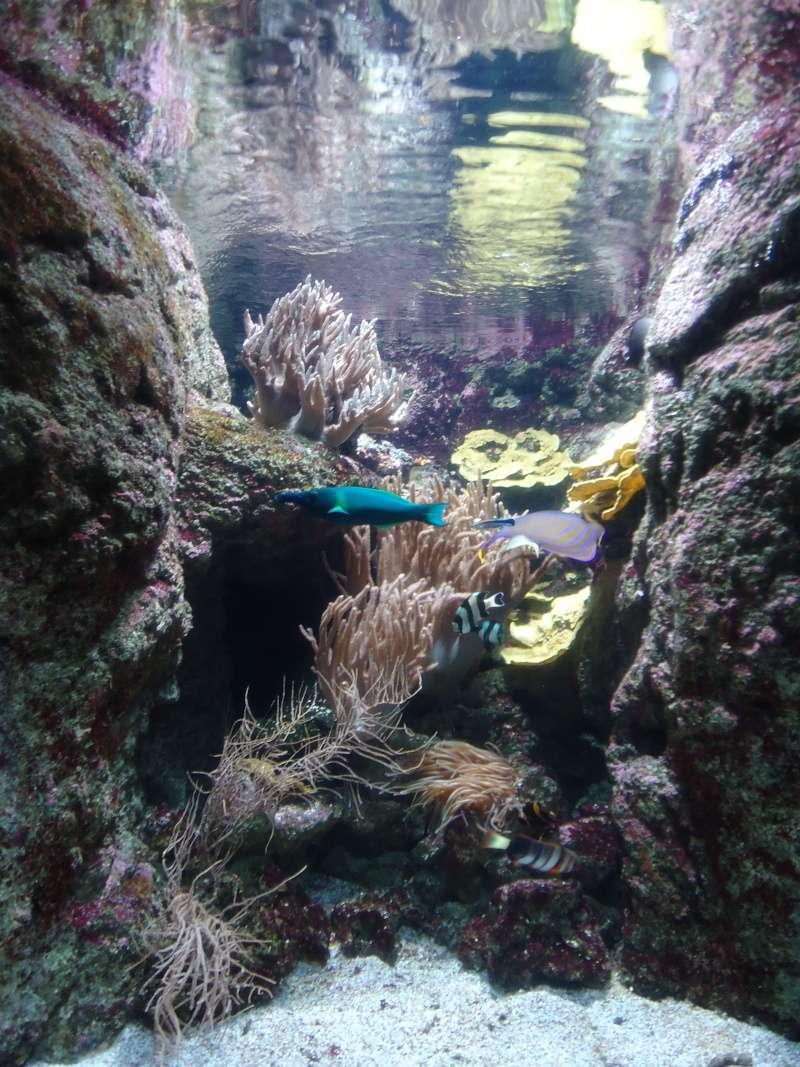 Aquarium du Trocadero à Paris Dsc08622