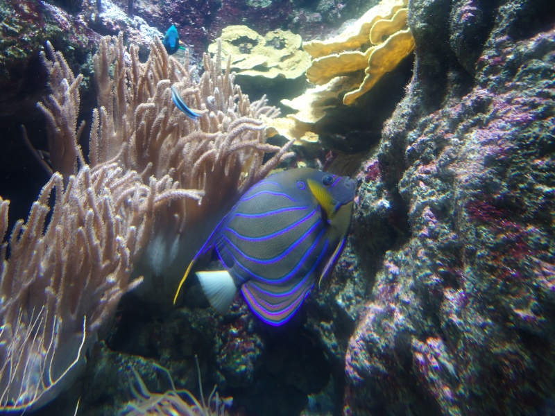 Aquarium du Trocadero à Paris Dsc08623