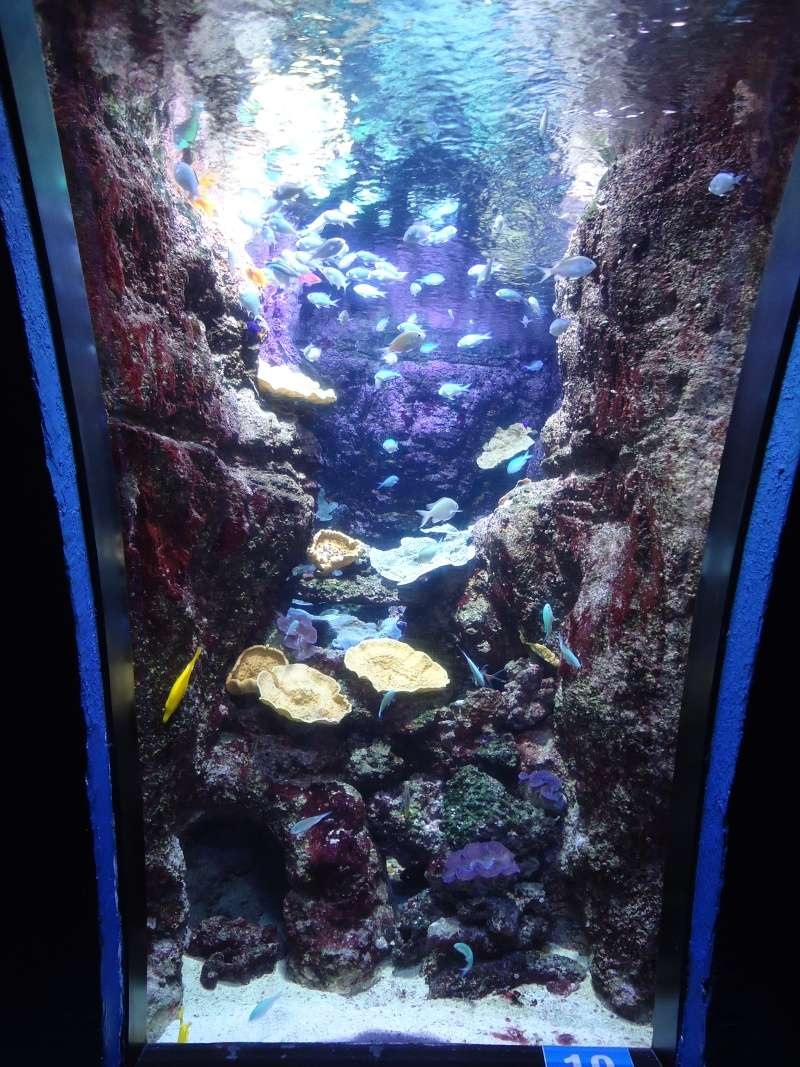 Aquarium du Trocadero à Paris Dsc08624