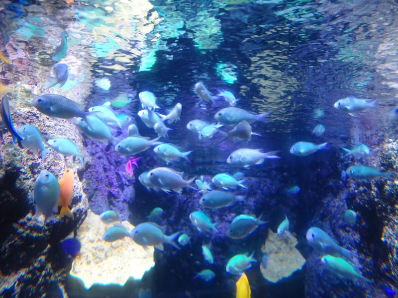 Aquarium du Trocadero à Paris Dsc08626