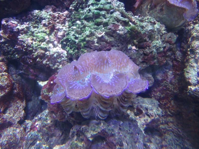 Aquarium du Trocadero à Paris Dsc08627