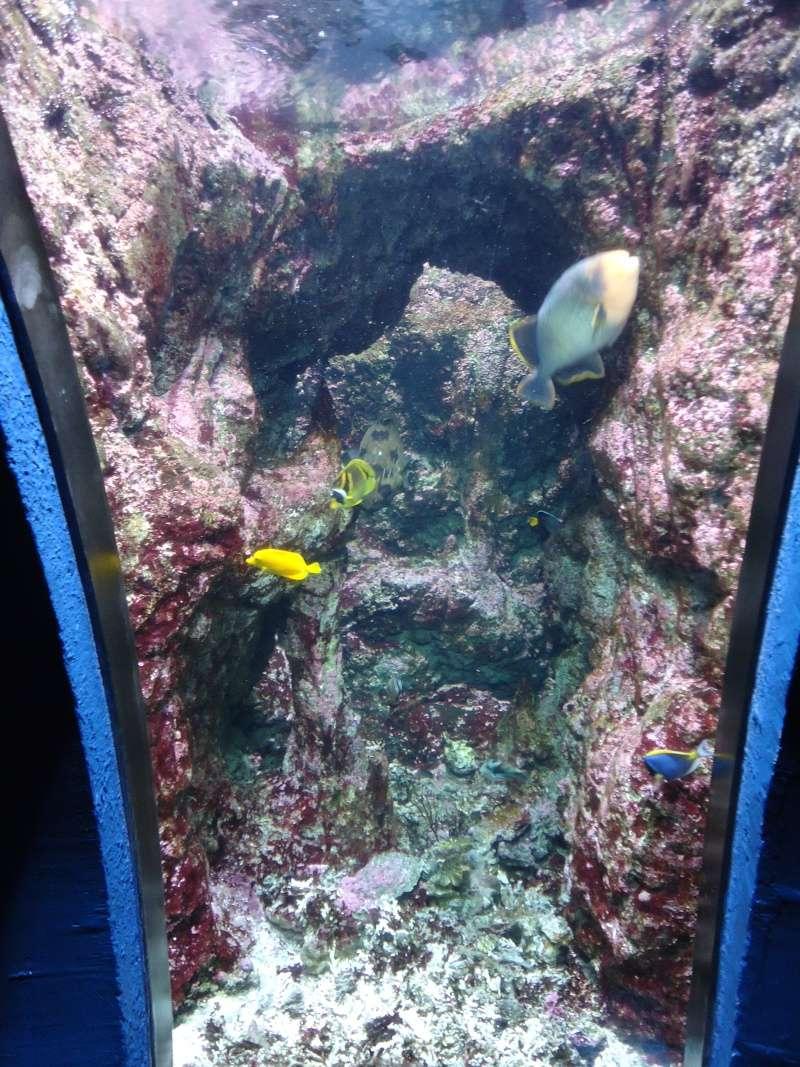Aquarium du Trocadero à Paris Dsc08628