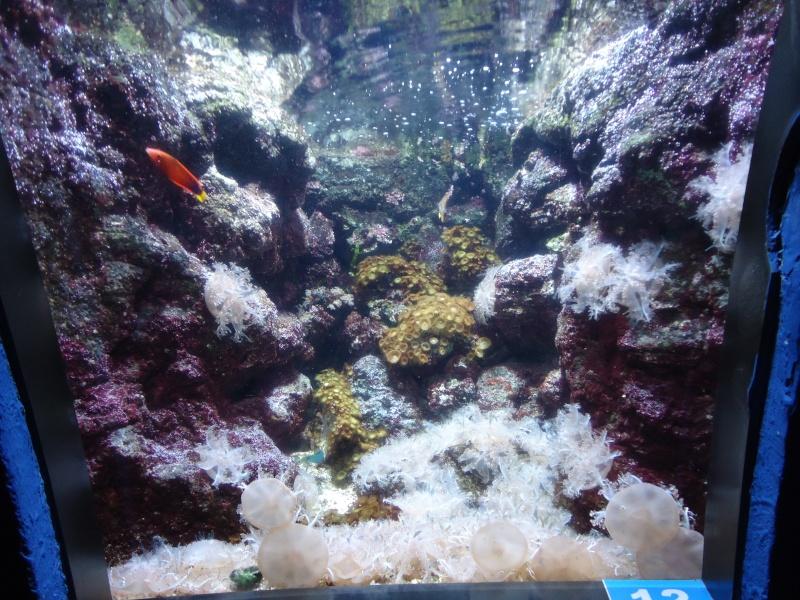 Aquarium du Trocadero à Paris Dsc08629