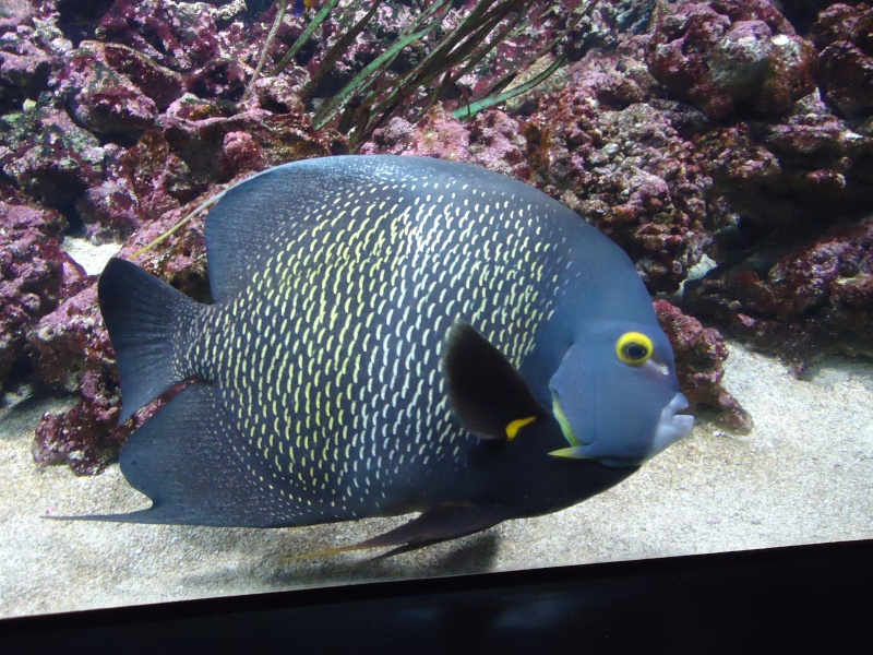 Aquarium du Trocadero à Paris Dsc08631