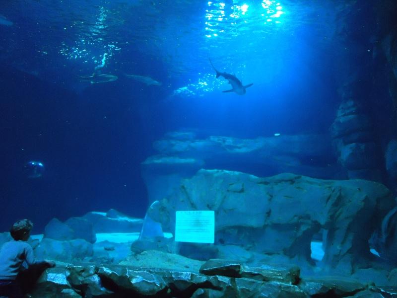 Aquarium du Trocadero à Paris Dsc08636