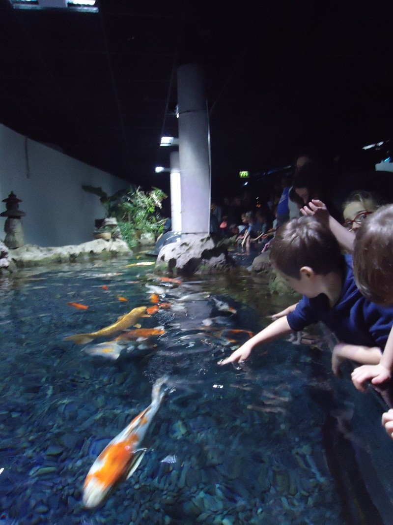 Aquarium du Trocadero à Paris Dsc08637
