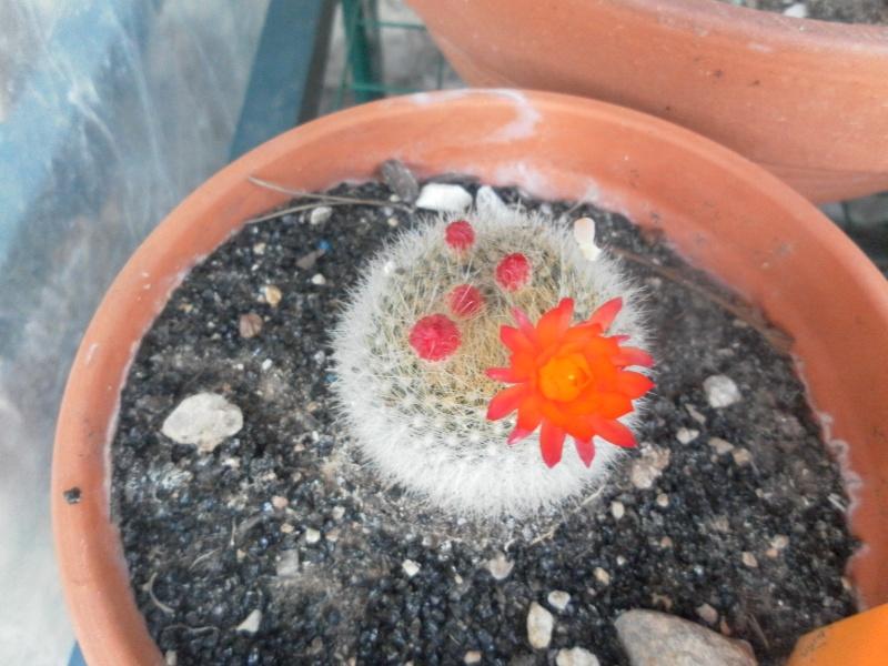 les plantes de syljou Brasil10