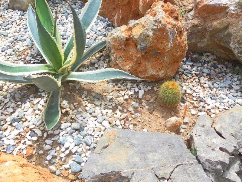 les plantes de syljou Erioca10