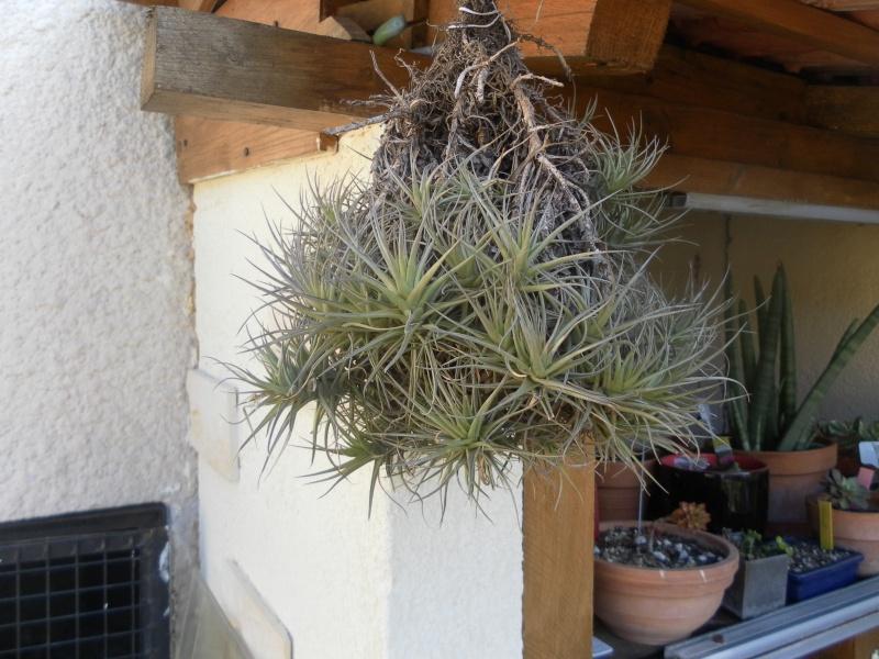 les plantes de syljou Sam_1010