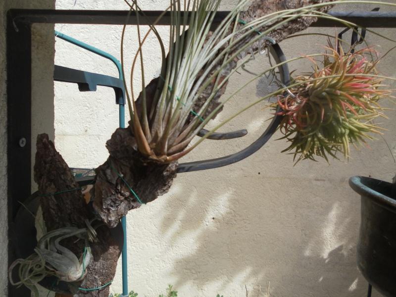 les plantes de syljou Sam_2210