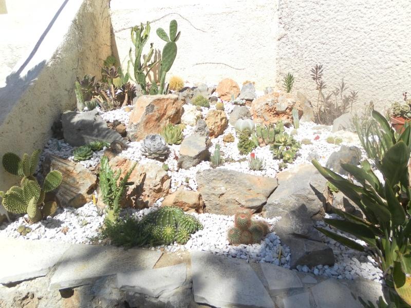 les plantes de syljou Sam_2311