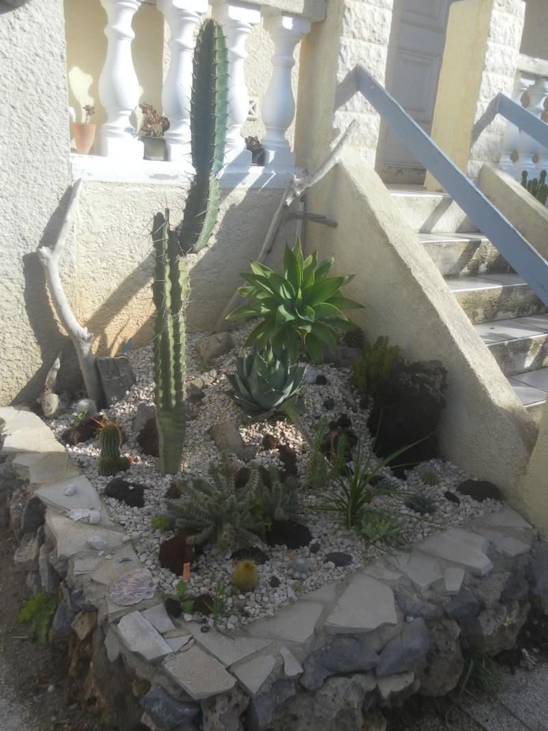 les plantes de syljou Sam_4514