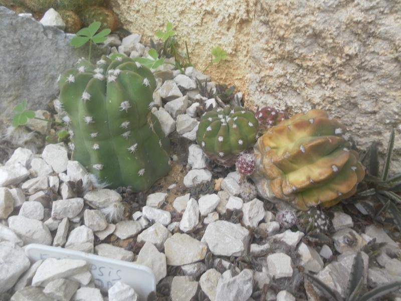 les plantes de syljou - Page 2 Sam_4616