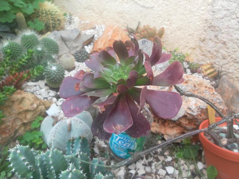 les plantes de syljou - Page 2 Sam_4617