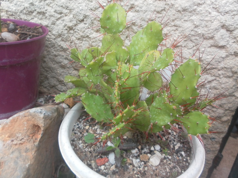 les plantes de syljou - Page 2 Sam_4618